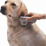 Dog With Flea Zapper