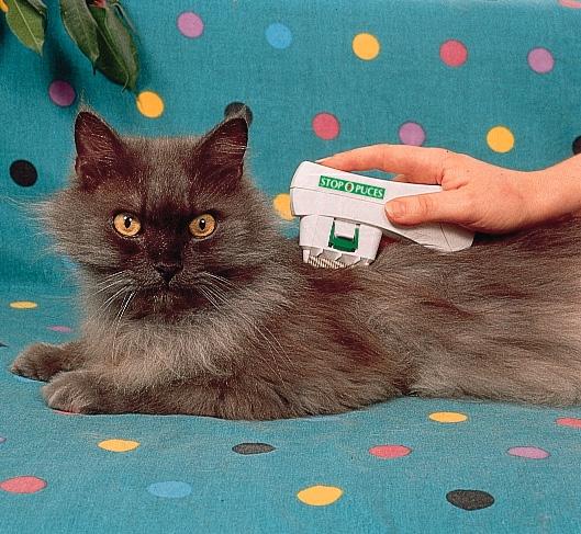 best cat litter box canada